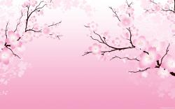 cherry-blossom-wallpaper-01-1280x800.jpg