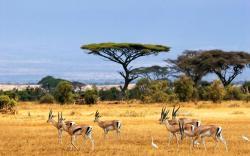 Savanna Animal Wallpaper Photos