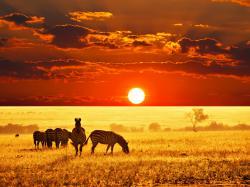 http://savannainafrica.files.wordpress.com/2012/01/african-savannah-zebras-wall-inkbluesky6.png