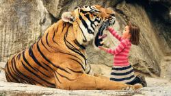 Description: The Wallpaper above is Say aah tiger Wallpaper in Resolution 1600x900. Choose your Resolution and Download Say aah tiger Wallpaper