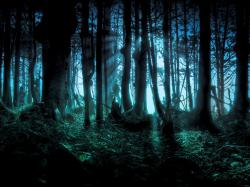 Scary Woods Wallpaper Awesome Images 147 Backgrounds
