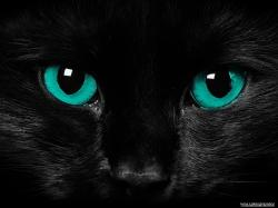 File:Scary cat eyes-1600x1200.jpg