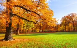 Park autumn scenery