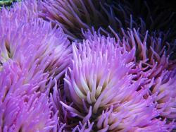 North Sulawesi – Corals