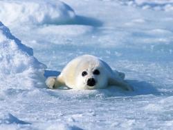... sea lion ...