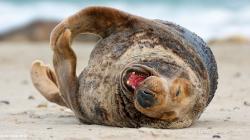 Sea Lion 9622