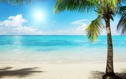 Wallpaper tropics palm beach sea clouds desktop wallpaper. Image Source