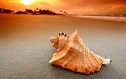 Beach Shell Sunset