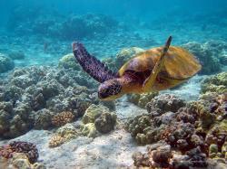 Turtles Sea Turtle