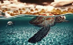 ... Sea Turtle Wallpaper ...