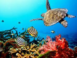 HTC First Sea Turtles wallpaper