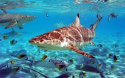 Sea underwater fish world