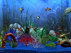 Free Pics of Underwater World, Fishes Swimming Through Various Sea Plants, Blue Bubbles.