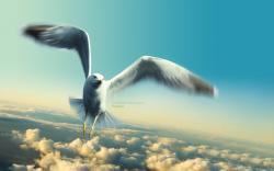 Animals & Birds Jonathan Livingston Seagull wallpaper