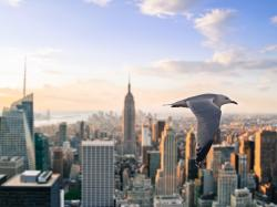 Description: The Wallpaper above is Seagull New York Wallpaper in Resolution 1600x1200. Choose your Resolution and Download Seagull New York Wallpaper