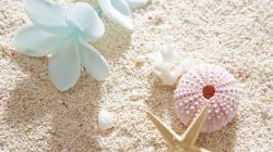 White Plumeria Seashell HD Desktop Background
