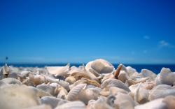 ... Seashell Wallpaper ...