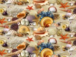 Seashell HD Wallpapers-12