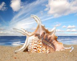 1280x1024 Shells Seashells wallpaper