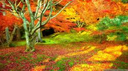 Wallpaper: Amazing colorful autumn scenes wallpapers. Resolution: 1024x768 | 1280x1024 | 1600x1200. Widescreen Res: 1440x900 | 1680x1050 | 1920x1200