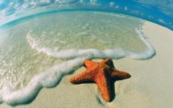 Seastar on Beach
