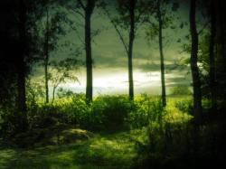 Free Serene Green Wallpaper Download The