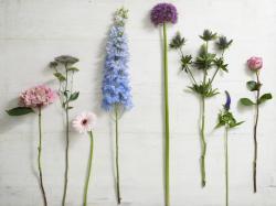 Recognizing Flower Shapes