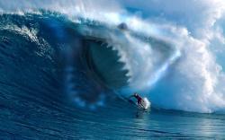Shark Wave