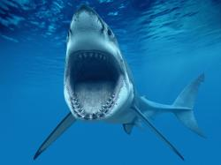 Shark Fish Great WhiteTeeth Underwater Blue Ocean CG wallpaper background