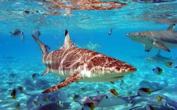 Nice photo with sharks and fish.