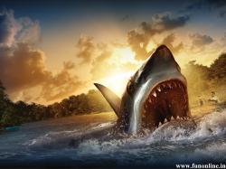 Fish Shark HD PIcture