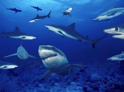 Cool Shark Wallpaper