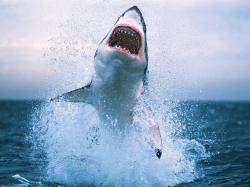 Shark- Photo#07