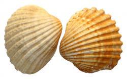 sea-shells-on-light-wallpapers.jpg 1,920×1,200 pixels