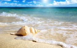 Beach Shells Wallpaper