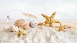 ... Shells Wallpaper ...