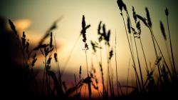 Nice Grass Silhouette Wallpaper Background is high definition wallpaper. You can make Nice Grass Silhouette Wallpaper Background For your Desktop Background ...