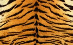 Seductive Fresh Imagery Tiger Skin Hd Wallpaper Background 1920x1200px