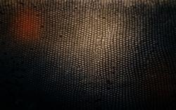 Skin Wallpaper