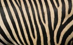 Skin Wallpaper 11231
