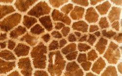 ... Skin Wallpaper ...