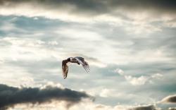 Sky Clouds Bird Seagull