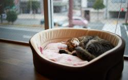 Sleep cat carrier