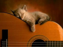 sleeping - cats Wallpaper