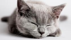 Description: The Wallpaper above is Sleeping Kitten Wallpaper in Resolution 1366x768. Choose your Resolution and Download Sleeping Kitten Wallpaper