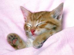 cute little cat · cute sleepy cat ...