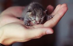 Small Kitten Hands