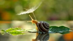 Wallpaper Tags: animals sun rays sayings sunlight nature god snails religious poems