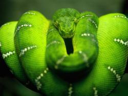 snake high resolution wallpapers best desktop background images widescreen