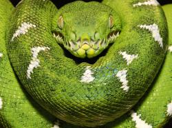 Snakes_04